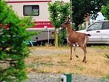 Photo of the Cape Lazo Resort Campground & RV