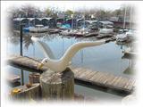 Photo of the Holiday Harbor Marina & RV Park