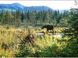 Photo of the Liard River Hotsprings Provincial Park