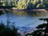 Photo of the Ucluelet Campground