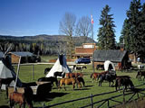 Photo of the Wells Gray Guest Ranch lodge