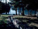 Photo of the Cultus Lake Provincial Park - Delta Grove, Clear Creek campgrounds