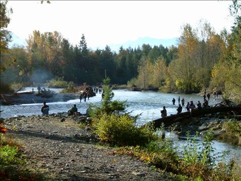 Fishing forum for Chehalis river fishing